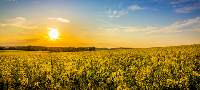 Revolutionerande miljöprodukt förväntas dominera marknaden inom kort