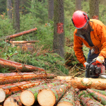 Därför är skogen en framtidsbransch för den som vill tjäna pengar